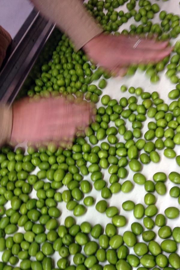 green alto olives