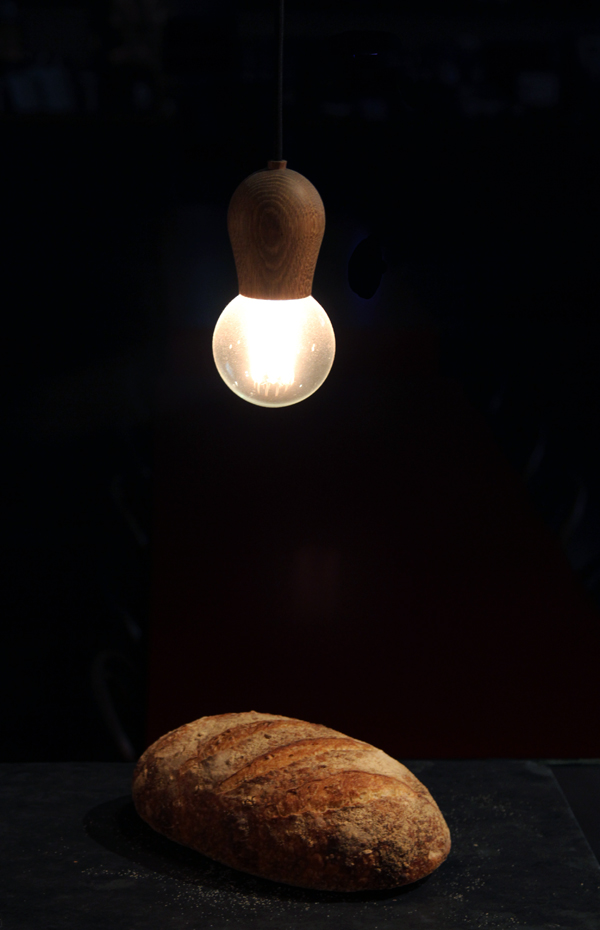 Sprouted wheat under lamp