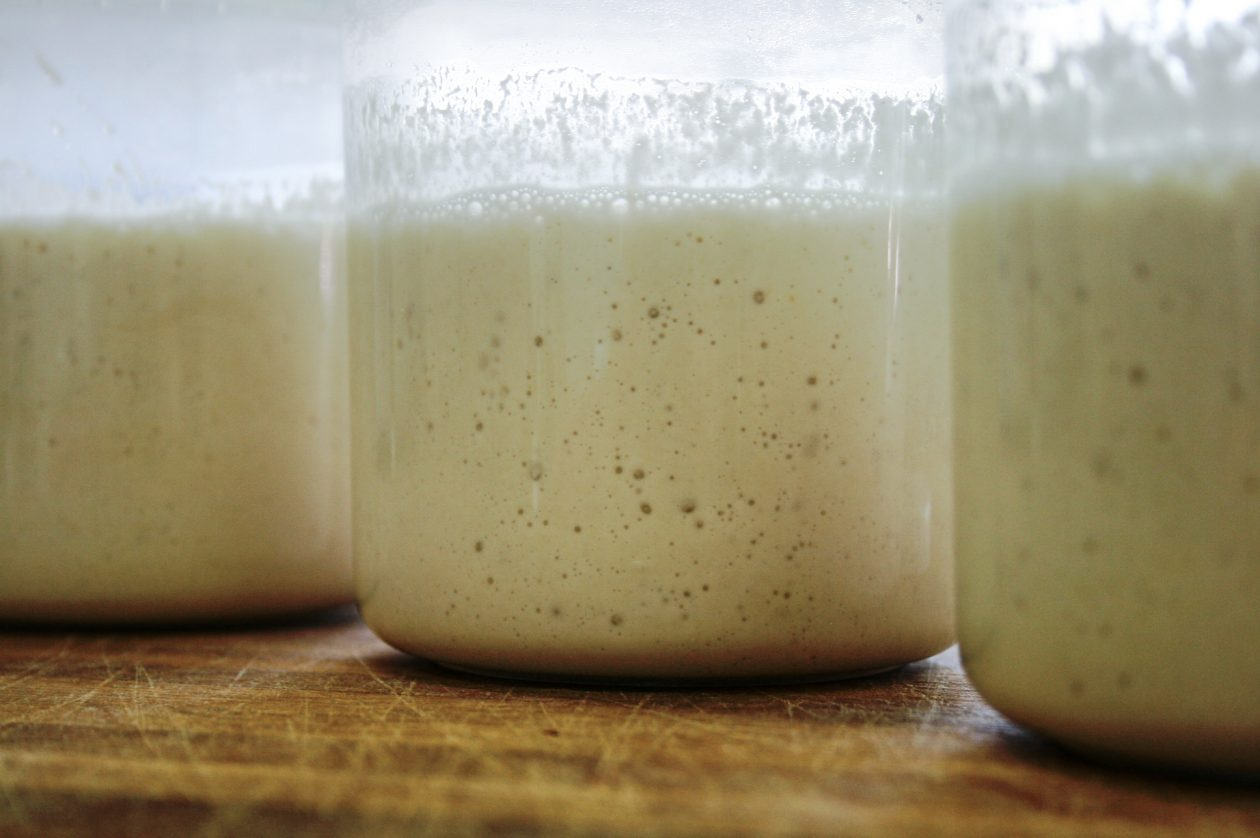 Sourdough Starter in Jars