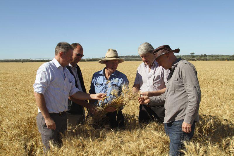 Wholesaler, Seed Breeder, Farmer, Miller & Baker
